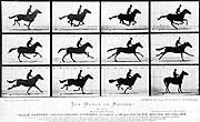 Muybridge's 1878 Horse in Motion